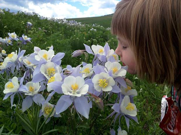 Stop and smell the flowers. Deep Creek, Colorado.